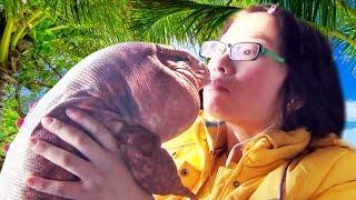☜ Pet Tegu Lizards -  Must Watch FAQ!