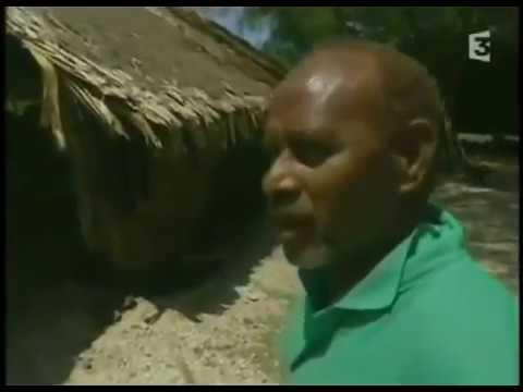 ✦CRUEL COWARD KILLING OF DOLPHINS IN THE SOLOMON ISLANDS✦