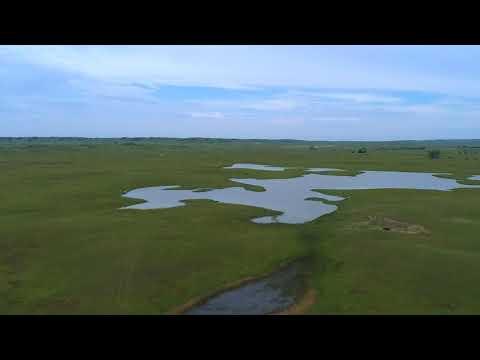 Nebraska Land For Sale | Custer County Grass