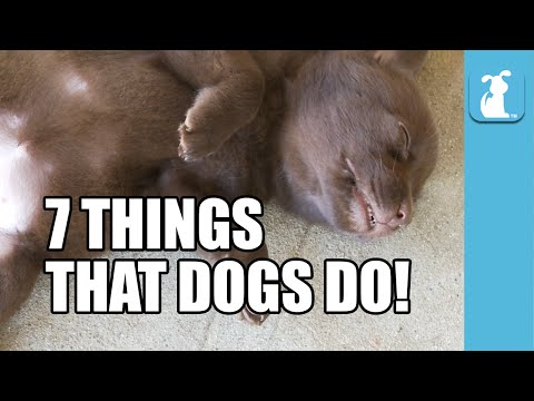 7 Things That Dogs Do!