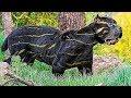 100 Самых Невероятных Животных, о Существовании Которых Вы не Знали
