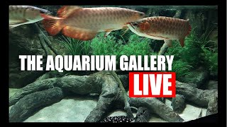 LIVE FROM THE AQUARIUM GALLERY!!