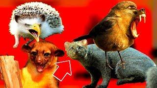 видео Виды экзотических животных со всего мира