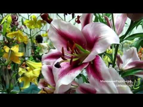 Выставка «Лилии»: красота, аромат и радость