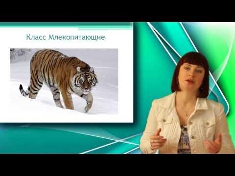 Плацентарные млекопитающие (рассказывает биолог Алексей Мосолов)