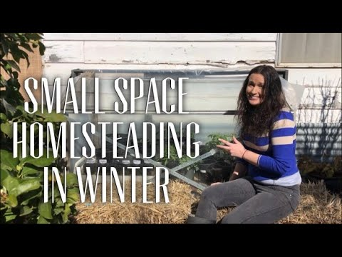 What Happens on a Small Homestead in Winter?