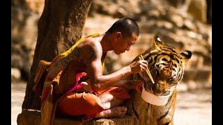 Таиланд. Тигриный монастырь