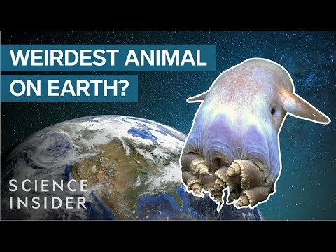Why The Octopus Is The Weirdest Animal On Earth