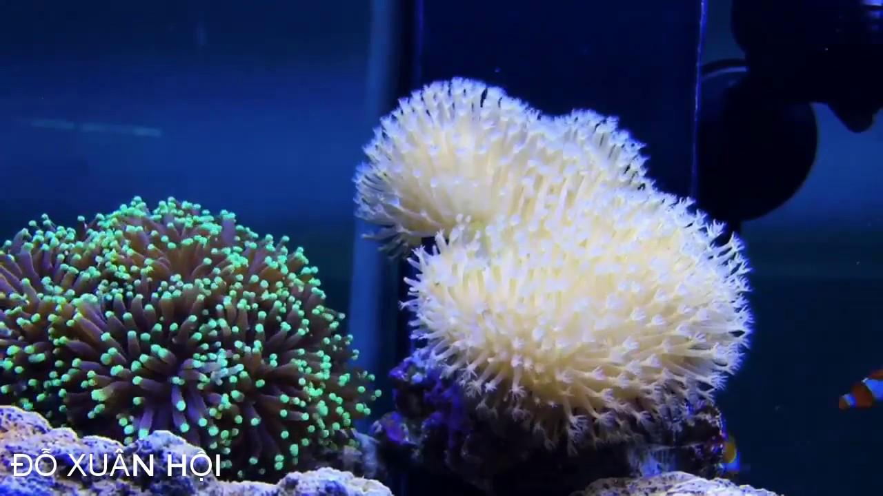 Bể cá thật đẹp khi có cây san hô – Đỗ Xuân Hội