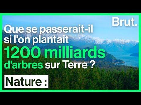 Reforestation massive : la solution pour limiter le réchauffement climatique ?