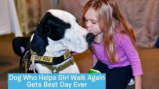 George the Great Dane Service Dog | DOG's BEST DAY