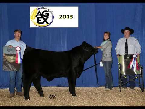 2015 Manitoba AG EX Limousin Breed Champions