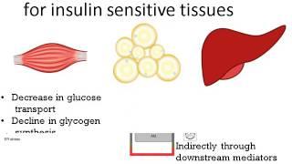 192-Obesity & Insulin Resistance