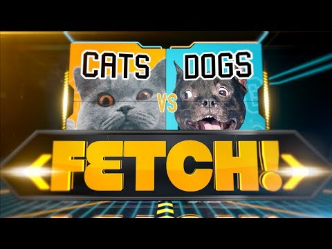 Cats vs. Dogs: Fetch!