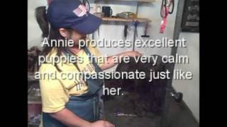 Grooming The Miniature Schnauzer Part 3 Of 3