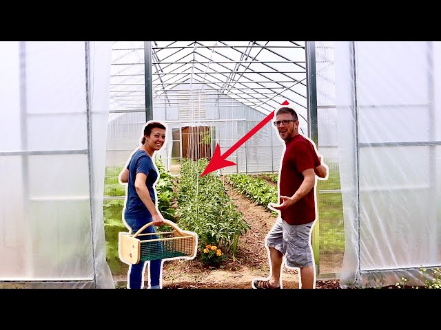 We Were SHOCKED by What Happened in the GreenHouse (In 1 WEEK!)