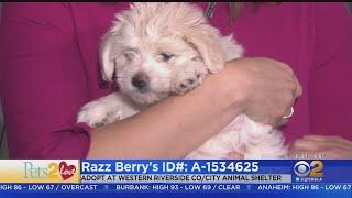 Pets2Love: Razz Berry