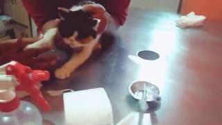 Gambar cover Cek darah kucing