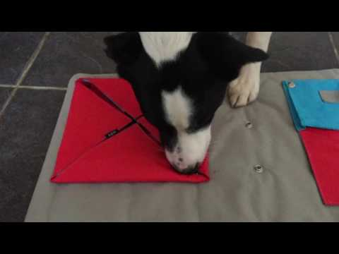 3 Dogs & 1 Buster Activity Mat