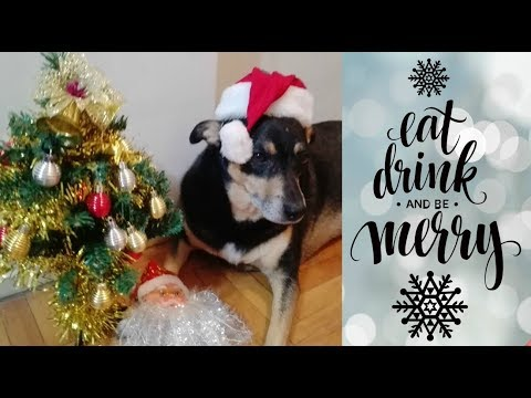 Happy Holidays From Max the Australian Kelpie Dog