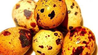 видео Перепелиные яйца: польза и вред, как принимать