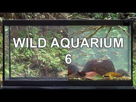 Wild Aquarium 6
