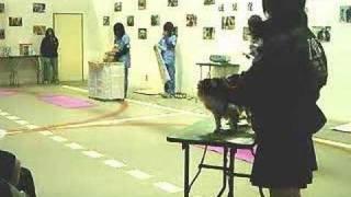 2008年2月24日に行われた成果発表会の様子です。学生たちがドッグマッサ...
