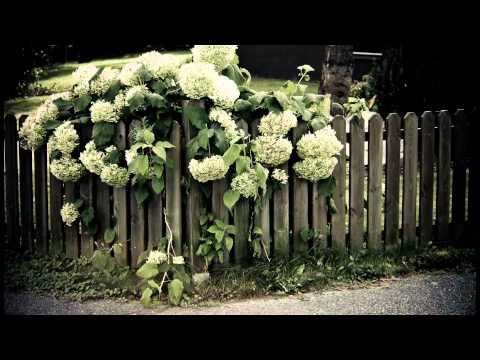 Wall Flowers - Garden Photography and Music