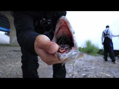 Salmon Fishing From Shore