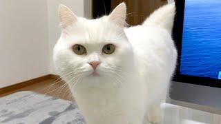 まだごはんの時間じゃないのに猫が圧をかけてきます…。