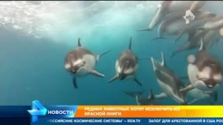 Минприроды России хочет исключить из Красной Книги 127 редких животных