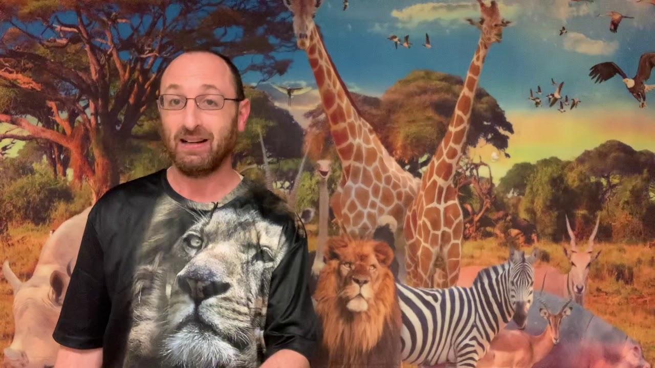Animal Torah: Lion in Vayigash Edition
