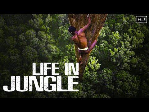 बिना किसी चिजों के क्या हम जंगल में कुछ दिन बिता सकते है..?   Life In Jungle