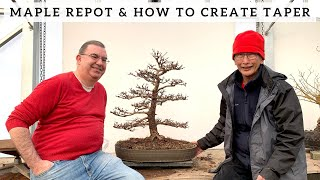 Maple Repot & How To Create An Apex
