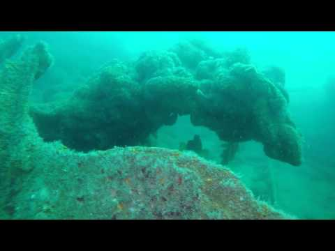 Dorset Sealife: Life on the Royal Adelaide 10.04.2015 (Jellyfish, wreck & more)