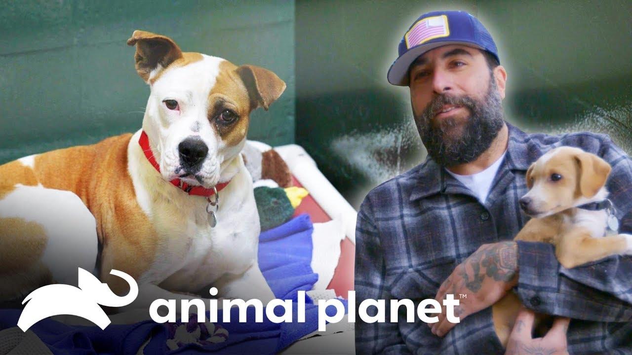 Antonio ajuda centro de adoção de animais | Um Lar para Pets | Animal Planet Brasil