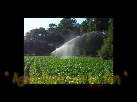 Corn irrigation with Kama ! happy farm holidays memories  ;)
