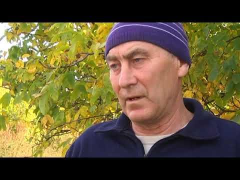 На Кіровоградщині дядько вбив племінника через 2 кг картоплі
