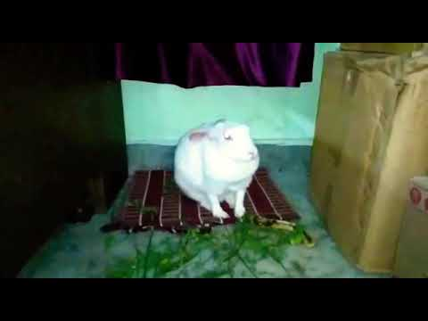 My Cute Female Rabbit Makeup Time | Funny Rabbit Reactions |