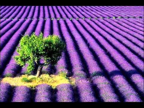 OST Lavender - Hua Shiang - Ambrose Hui