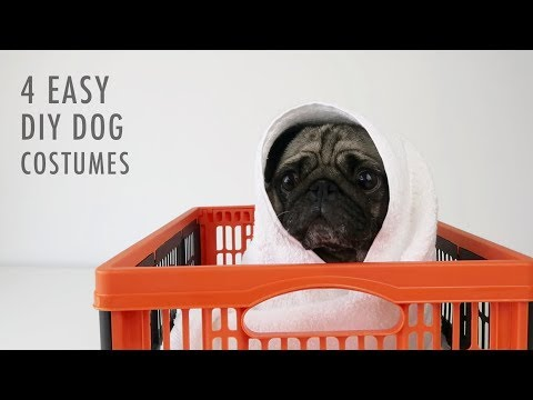 4 Easy DIY Halloween Costumes For Dogs