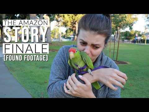 releasing-a-parrot-into-the-wild