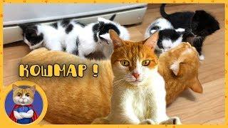 Рыжик, Печенька и спасенные котята