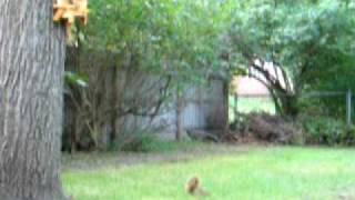 Crazy Squirrel Going Nuts