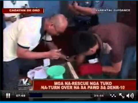 ABS-CBN Cagayan de Oro . News Tuko TV Patrol TV Patrol Northern Mindanao