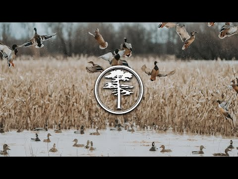 Duck Hunting- Duck Food Plots and Managing Duck Property