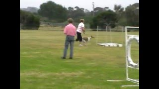 20091121 Fdoc Jumping Novice Not Trialed Funday Highlights.mpg