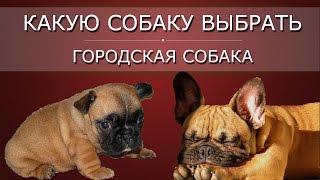 Какую собаку выбрать, ч 3| Городская собака