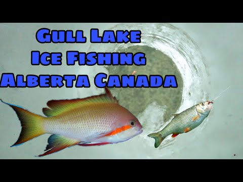 GULL LAKE ICE FISHING  2020 I ICE FISHINGIFIRST ICE FISHING I HOW TO DO ICE FISHING ON A FROZEN LAKE