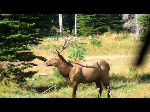 Elk Hunting Crossbow Kill Outdoor Secrets with Babe Winkelman